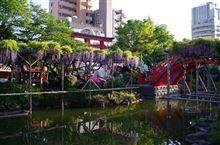 亀戸天神・藤祭り