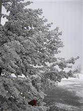 2013GW Day1 ~渋峠の雪壁 あわてる○○は… (2)