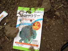 野菜の種w