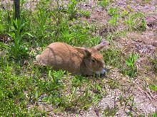 ウサギと戯れる