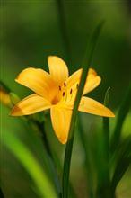 5DⅢと近隣の草花撮影でゴールデンウィークの締めくくり!!