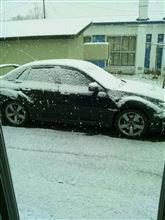 またもや雪、でも・・・