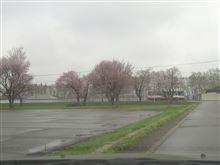 桜咲いたら急にあったけぇ。