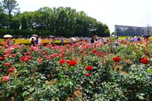 神代植物公園のバラ