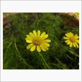 梅雨の晴れ間に花の植え替えを