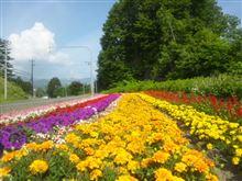 洞爺湖、花のじゅうたんに萌え萌え・・・
