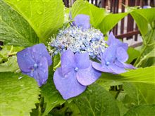 六月の雨の雫