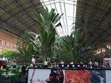 ◆駅が熱帯植物園???
