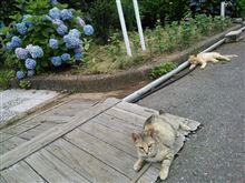 【出走率 - 2013年6月】
