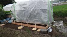トマト収穫 ビニールハウス台風対策