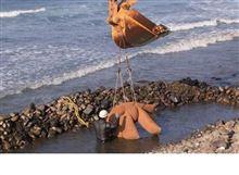 豊かな海辺には「鉄分」が欠かせません