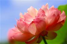 炎天下に負けず、神代植物公園に花撮り散歩