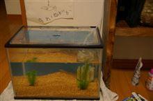 我が家の水族館