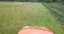 田んぼも畑も草だらけ・・・