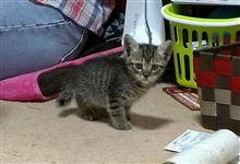 新人猫さん