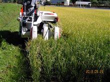 稲刈り実施。