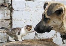 ネコとイヌ・・・