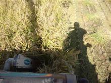 稲刈り2日目です。