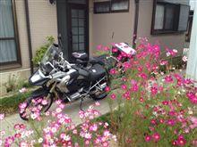 R1200GSと秋桜2