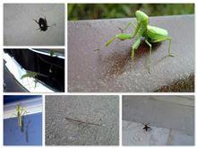 昆虫採集 2013.10.10