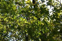 【後篇】 神代植物公園と深大寺