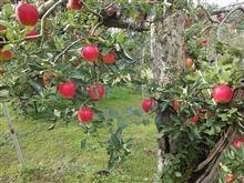 昨日はりんご狩りに 群馬県へ