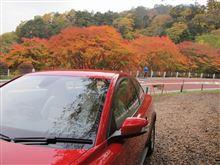 奥多摩の紅葉を見に行く