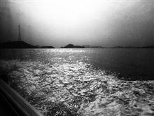 11月の連休 うさぎ島ににんじん持って行ってきました。