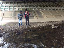 散歩日記: 鮭の遡上に出くわした編