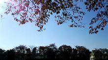 蒼空 久々に空を眺めると秋空が。。。