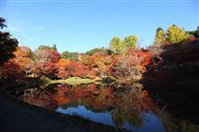 用作公園の紅葉と建築ウォッチング