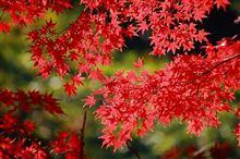 深まる秋♪