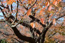 紅葉(黄葉)に染まる秋の等々力緑地 ~ 神奈川県・川崎市 ~