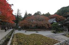 糸島にある雷山千如寺の大カエデは
