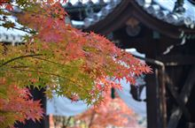 紅葉シーズンなんで