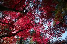 2013年秋 錦繍の平林寺 1/2