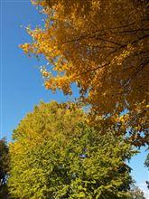 秋深い境内と青GTI