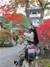 秩父御嶽神社(東郷公園)へツーリング