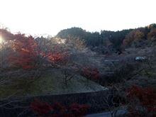 小原四季桜情報20131129-1