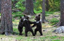おとぎ話のように3匹の森のクマさんがダンスする姿がカワイイ!と話題に