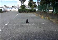 猫軍団・・・①  (本日)