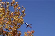 空港で見つけた小さな秋