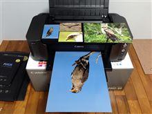 写真用のA3プリンター購入