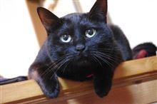 黒猫 駒子どす