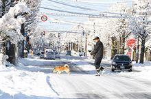 【いきいき富山】 大雪ピーク越える 29日の県内