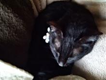 ネコは娘と寝てます~