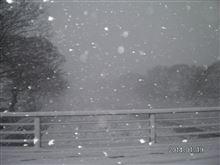 大雪でないけど。
