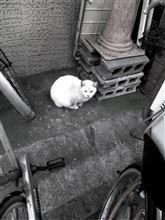 一昨日の猫