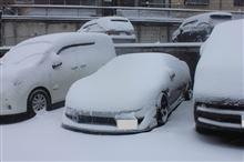 。゚※゚。゚ 大雪 ゚。゚※。