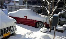 久しぶりの大雪(ブルッ)